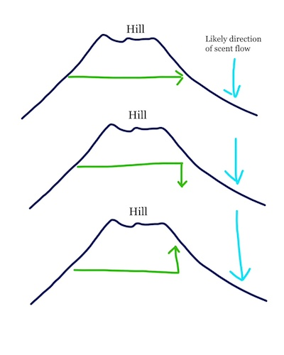 hill diagram