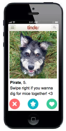 Pirates_Tinder_Profile.png